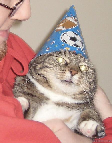Swoosh Cat Meme