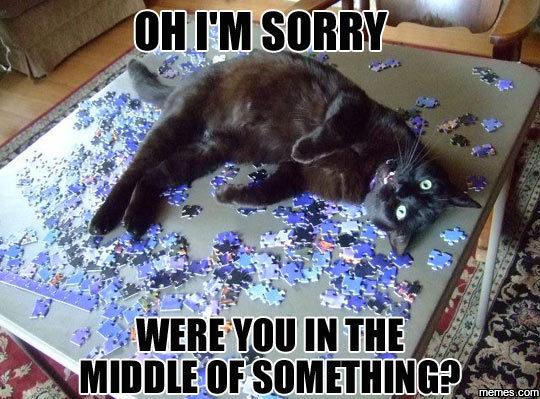 Oops, Sorry Human
