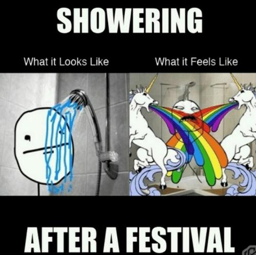 1129531 home memes com,Festival Memes