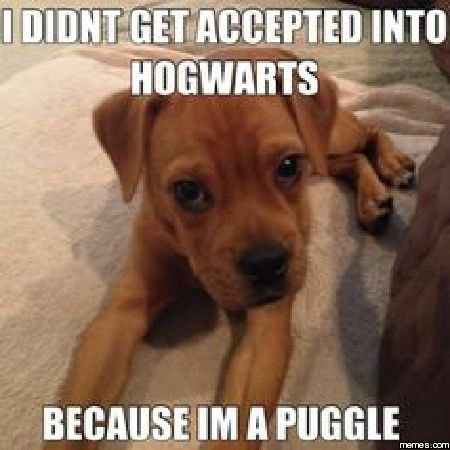I'm a puggle