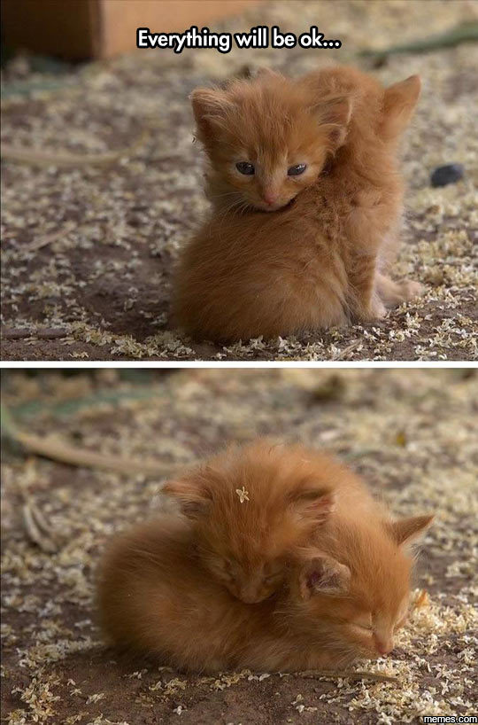 Cute Cat Hug Pictures