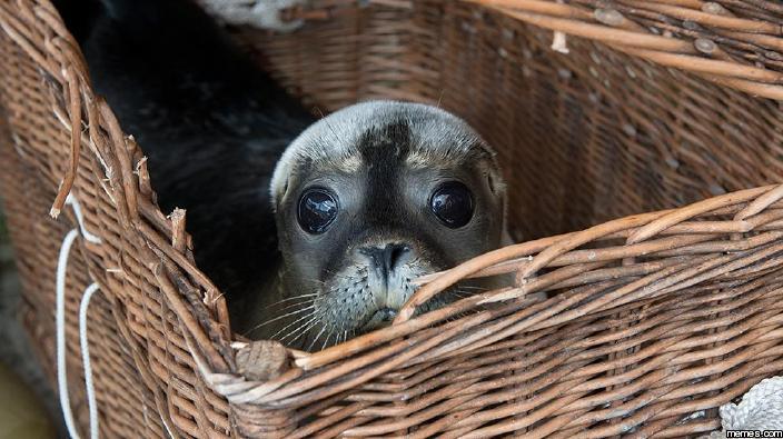 """Результат пошуку зображень за запитом """"sad seal"""""""