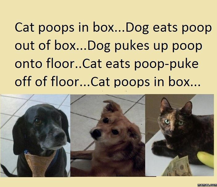 Cat Poops In Box