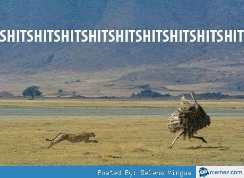 Cheetah chasing ostrich