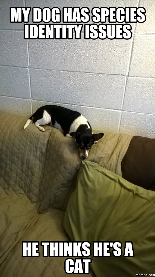 Dog Thinks He Is A Cat