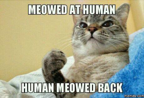 388074 home memes com,Meow Meme