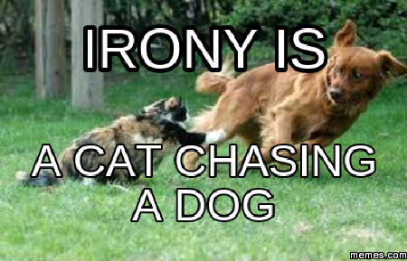 Cat Chased By Dog