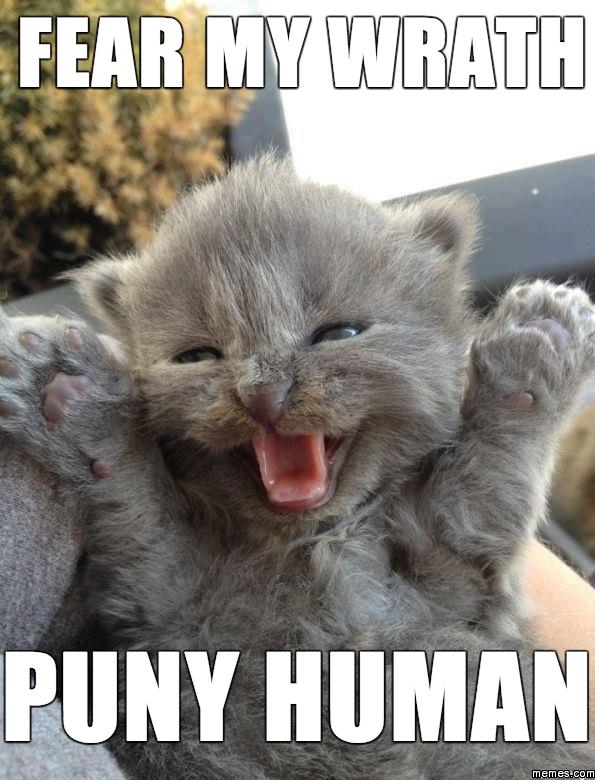Retarded Cat Meme
