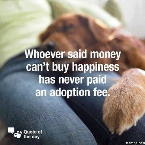 Trade Me Dogs To Adopt