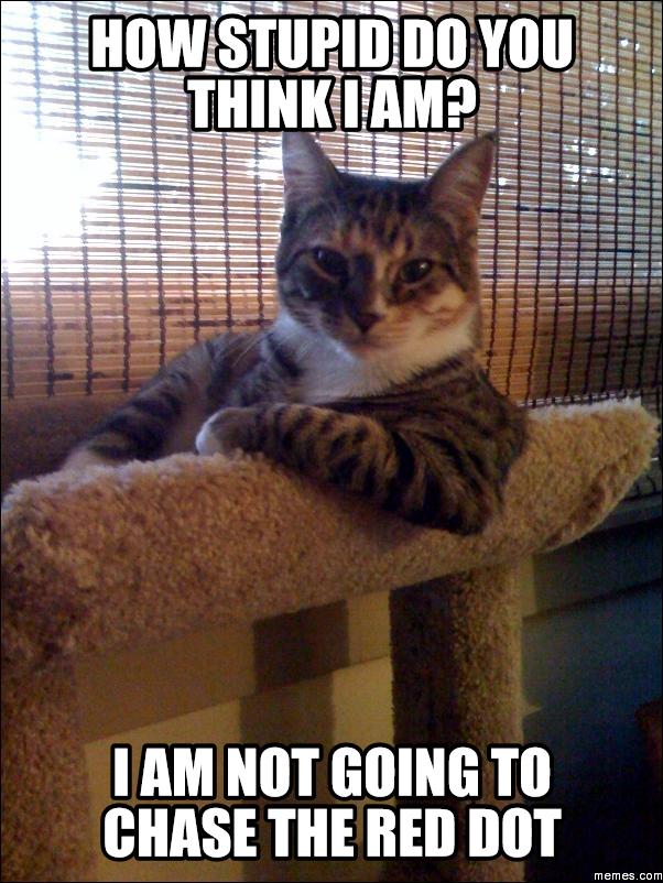 happy birthday image funny cat