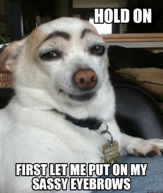 dog meme husky