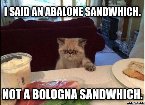 473609 home memes com,Bologna Meme