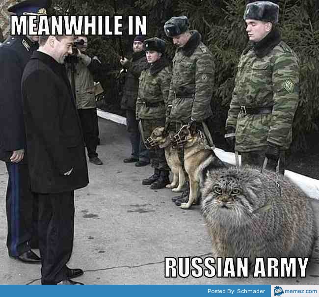 Fail Army Funny Cat Videos