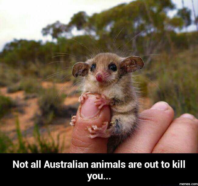 cute australian animal