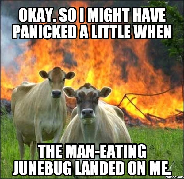 Funny Memes June : Image gallery june bug funny