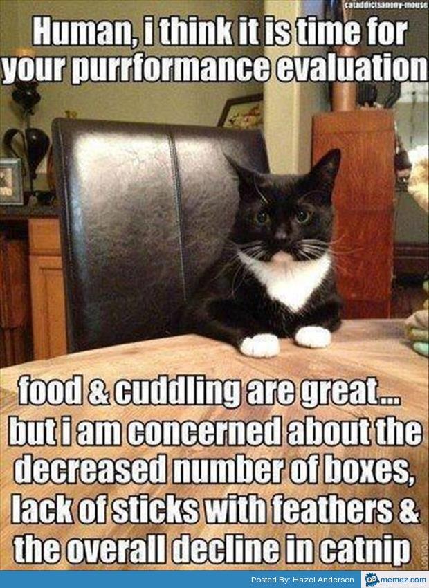 Cute Cats Doing Human Things