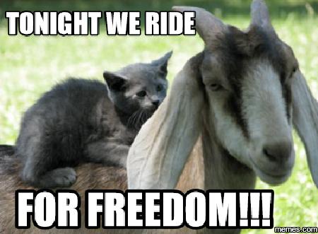 Image result for freedom meme