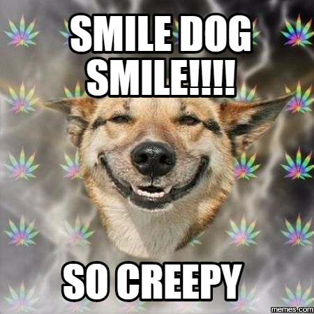 692565 smile dog smile!!!! so creepy memes com,Smiling Dog Meme