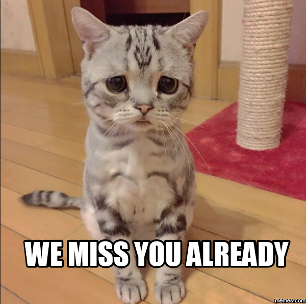Funny We Miss You Meme : I miss you already meme funny memes cute