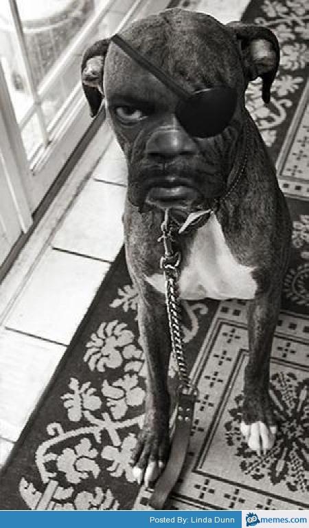 Samuel Jackson boxer dog