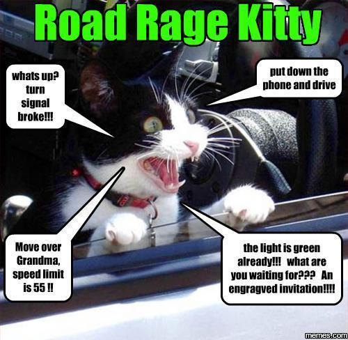 Road Rage Cat Memes