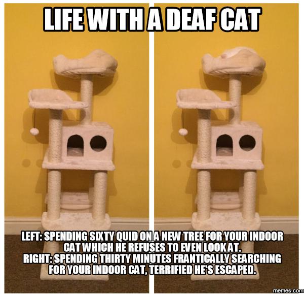Cat Memes Christmas Tree