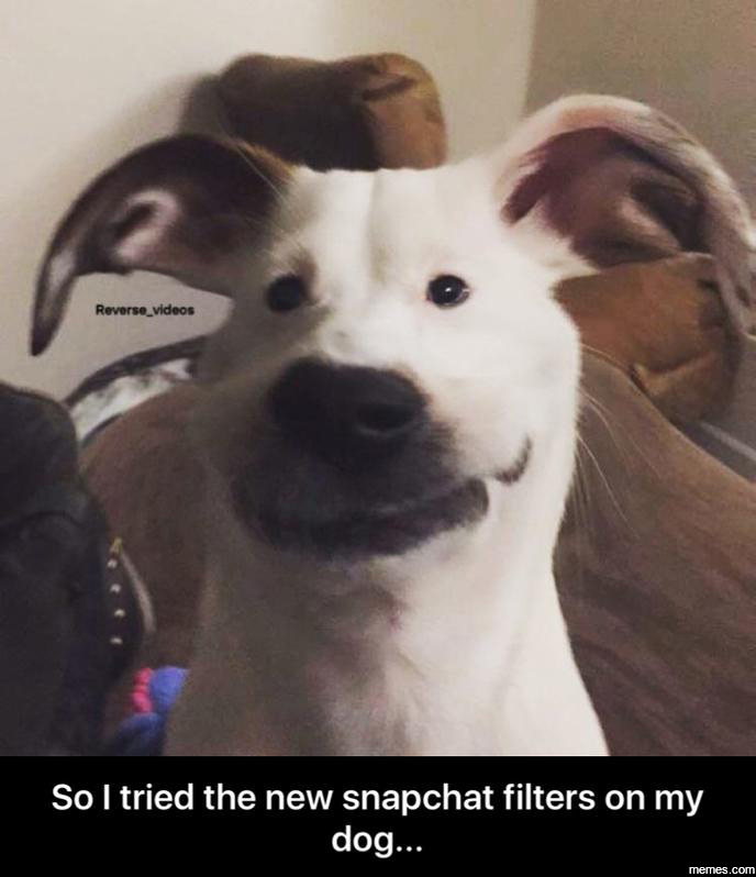 Funniest Meme Pages On Snapchat : Home memes