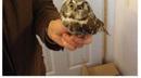 Owl isn't amused