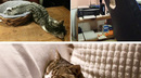Cats too tired to care