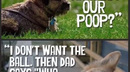 The World From A Dog's Perspective