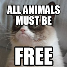 All animals must be  free