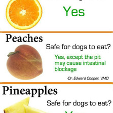 These are the fruits you can and cannot feed your dog