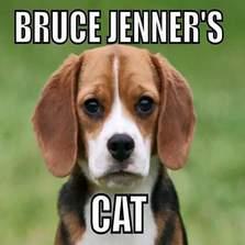 Bruce Jenner's cat...