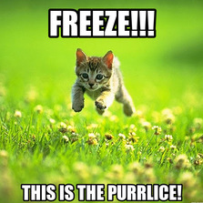 Freeze this is the...