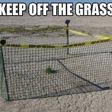 Keep off the grass...