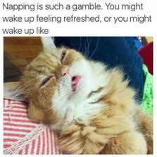 Napping is such a gamble...