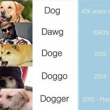 Dog, Dawg, Doge...
