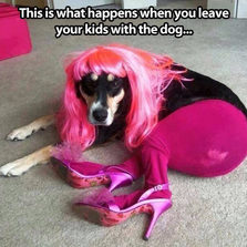 cool-dog-dressed-pink-hair