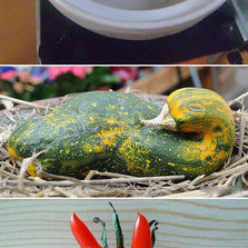 Fruits And Vegetables That Forgot How To Be Plants