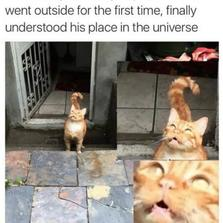 My indoor cat went outside...