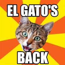 El Gato's  Back