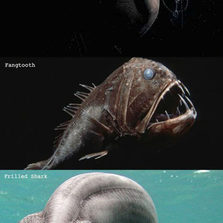 The ocean can be scary