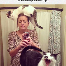 Cat People Will Know