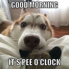 cool-dog-bedside-morning