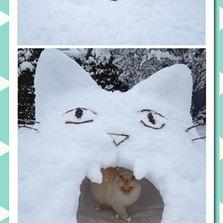 Cat Snow Fort