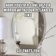 cool-pet-mirror-reflection-show