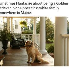 cool-Golden-Retriever-dog-breed