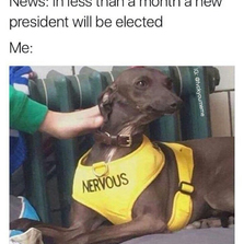 Me during the elections