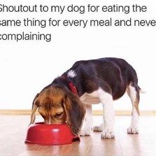 shoutout to my dog