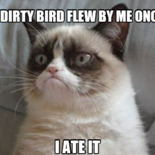 Grumpy Cat Hilarious Cat Pictures With Captions